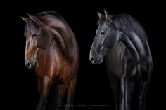 Fine art animal photography of multiple-award winning photographer Wiebke Haas. Find mesmerizing portraits especially of beautiful horses outdoor and in studio. Majestic Horse, Beautiful Horses, Pretty Horses, Equine Photography, Animal Photography, Wild Photography, Big Photo, Photo Competition, Horse Pictures