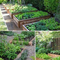 Herb Garden, Vegetable Garden, Home And Garden, Raised Garden Beds, Permaculture, Garden Projects, Farmer, Flora, Backyard