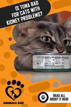 Most cats are fond of tuna juice and canned tuna. While tuna is okay for cats as a treat or in moderation, giving them canned tuna too much can be bad. Best Cat Food, Dry Cat Food, Metabolic Acidosis, Kidney Disease Symptoms, Cat Diet, Good Sources Of Protein, Low Sodium Chicken Broth, Protein Diets, No Cook Meals