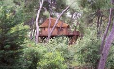 Sophisticated Tree House Design Ideas for Perfect Hideaway Place: Wacky Tree House Design Ideas for Perfect Hideaway Place