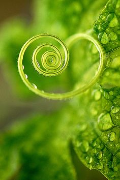 I think my favorite spirals are those made by Nature. Maybe because Green is also my favorite color....