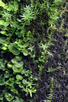 Hygrolon - Moss and fern studie | Flickr - Photo Sharing!