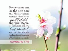 numbers messianic significance of korah Mercy Seat, Yes And Amen, Scripture Pictures, The Tabernacle, Almond Blossom, Faith In Love, Gods Promises, Jesus Christ, Bible Verses