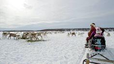 Reindeer owners