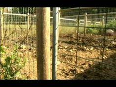 Understanding & Raising Pigs : Pigpens
