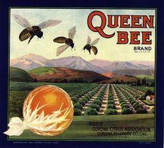 Vintage Labels, Vintage Ads, Vintage Posters, Vintage Signs, Vintage Crates, Retro Ads, Vintage Ephemera, Medan, Orange Crate Labels