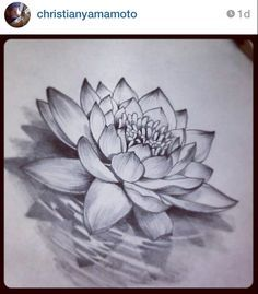 open lotus pencil sketch - Google Search