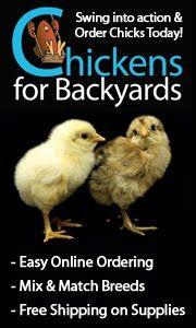 The Chicken Chick: Great backyard chicken website.