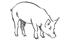 Pig Cartoon Drawing in 4 Steps With Photoshop in 2019