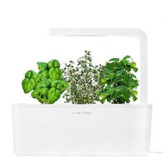 Click & Grow Smart Herb Garden Indoor Grow Kit with Basil, Thyme, and Lemon Balm Cartridges: Amazon.it: Giardino e giardinaggio