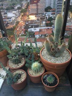 Plantas para ambientes externos. #dicademelissasales #melissasales #melissasalesdecor #table_rn