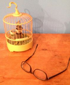 oiseau myope