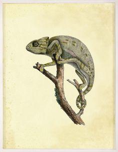 Lesson Reptiles 2