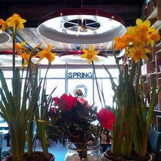 """А в ресторане ОТТО всё готово к весне! """"Весна идёт - весне дорогу!"""" #pizzaotto #отторесторан #безфильтров #весна #доставканастоящейпиццы #пиццанадровах #красносельскийрайон #матисовканал #балтийскаяжемчужина #этопитердетка"""