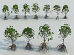 mangrove tree - Google Search