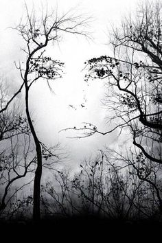 cool!! Tree banches that form a face