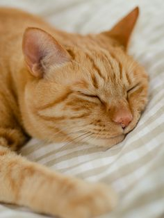 Common Meanings Of Cat Behavior Pretty Cats, Beautiful Cats, Animals Beautiful, Gato Animal, Mean Cat, Orange Tabby Cats, Yellow Cat, Cat Aesthetic, White Cats