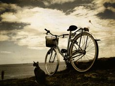 *if I rode a bike it'd look like this, I'd go here, and I would definitely have my cat.