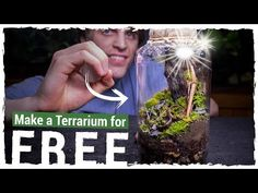 Make an AWESOME Terrarium for FREE! - YouTube