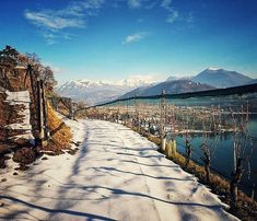 "The beauty of wine... thanks @myrazuendel for this amazing pic of your vineyards in the ""winter mood"".  In love with Ticino!  #wine #vino #vin #wein #Ticino #switzerland #vineyards #wonderlust #wanderlast #winelovers #winery #landscape #snow #winter #Xmas #travel #globetrotter #passionpassport #beautifulmatters #wineissharing #beauty #cute #cutie #sun #montains #alps #sky"