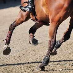 Horses ♥ My two favourite disciplines in riding.... Jumping, and Reining!