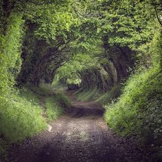 You can find many magical ancient holloways like this across Britain's countryside. This was walked along by @forgottenheritage in the South Downs #lovegreatbritain