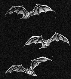 Aesthetic Grunge, Aesthetic Art, Aesthetic Pictures, Arte Alien, Arte Obscura, Horror Art, Dracula, Vintage Halloween, Dark Art