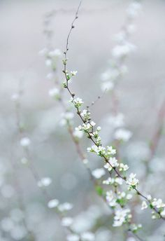 Flowers of winter.
