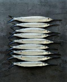 Untitled (9 fish) by one of Australia's premium food & lifestyle photographers, William Meppem. via the loop