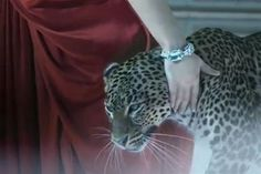 EPIC #Cartier ad - be sure to click twice on the link to watch the L'Odyssée de Cartier film directed by Bruno Aveillan