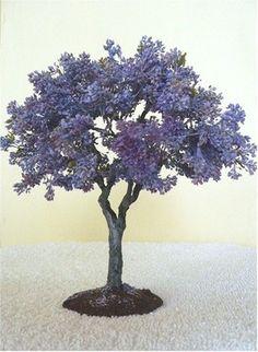 Jacaranda bonsai!