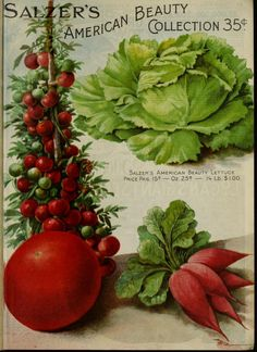 1905 catalogue page Garden Catalogs, Plant Catalogs, Seed Catalogs, Vintage Flower Prints, Vintage Botanical Prints, Vintage Flowers, Vegetable Pictures, Vintage Seed Packets, Decoupage
