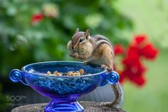 Oh it's delicious I want to tell you ... by alpav2002 #animals #animal #pet #pets #animales #animallovers #photooftheday #amazing #picoftheday