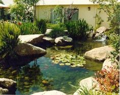 Water pumps – These equipment hard work hand-in-hand having the water filters. They improve the water dissemination in your pond so that the water will certainly happen to be filtered properly.