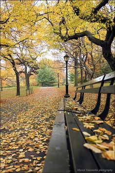 Bench fall by Marcos Vasconcelos Photography on Flickr - Central Park, NYC. My favorite park in the entire world because, my daughter lives in NYC.