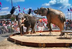 Elephant Encounter | Jan 18 - Feb 3, 2013 | South Florida Fair