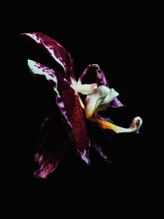 These beautiful set of photographs of decaying orchids, roses and leaves were shot by Billy Kidd, an extremely talented photographer based in New York.