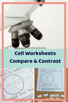 Cells can be tricky to teach. Cell Freebie for Cell Diversity. Teacher Freebies, Classroom Freebies, Middle School, High School, Graduate Degree, Cell Structure, Similarities And Differences, Cell Biology, School Levels