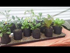 """Incredible Automatic Self Watering Grow Bag Garden System """"Plant it and Forget It"""" Indoor Aquaponics, Aquaponics System, Hydroponics, Gutter Garden, Herb Garden, Hopsin, Self Watering Plants, Tower Garden, Garden Windows"""