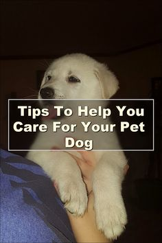 Be wary about certain flea treatments to use for your dog. There are ingredients in some of them that can risk cancer in your children. Ask your vet for recommendations. Be sure to keep children away while you're applying any flea treatment. Pet Dogs, Pets, Dogs And Puppies, Best Dog Breeds, Small Dog Breeds, Small Dogs, Pet Care Tips, Dog Care, Group Of Dogs