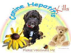 Canine Hepatitis Kills Please vaccinate Me