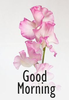 Beautiful Good Morning Wishes, Good Day Wishes, Good Morning Beautiful Pictures, Good Morning Happy Sunday, Good Morning Image Quotes, Good Morning Images Flowers, Good Morning Images Hd, Good Morning Picture, Morning Quotes