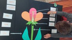 School Resources - Science: Flower Anatomy 3D project | Plants ...