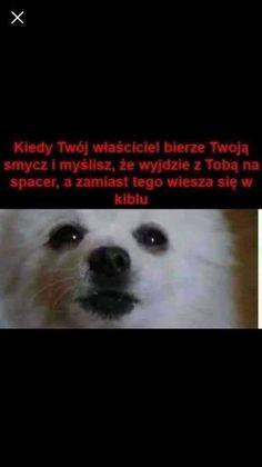 Best Memes, Funny Memes, Jokes, Polish Memes, Past Tens, Nyan Cat, Meme Template, Really Funny, Laughter