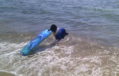 Flash surfeando en la playa - GANADORA - Flash va a comer gratis en 2014 @GERARDBARBERA