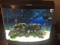 Buy 55 gal fish tank with stand,and everything you would need for saltwater aquarium at online store Saltwater Aquarium, Aquarium Fish, Fish Tank Stand, Tanks, Vr, Store, Saltwater Tank, Shelled, Larger