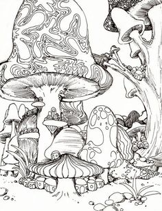 mushroom sketches comments