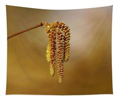 Golden Catkin Tapestry x by Helen Kelly. Our premium tapestries are available in three different sizes and feature incredible artwork on the top surface. Large Tapestries, Wall Tapestries, Tapestry, Basic Colors, Vibrant Colors, Wall Spaces, How To Be Outgoing, Color Show, Colorful Backgrounds