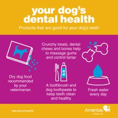 #Dental #health of your #pets