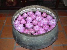 ホーチミン 2004年 蓮の花
